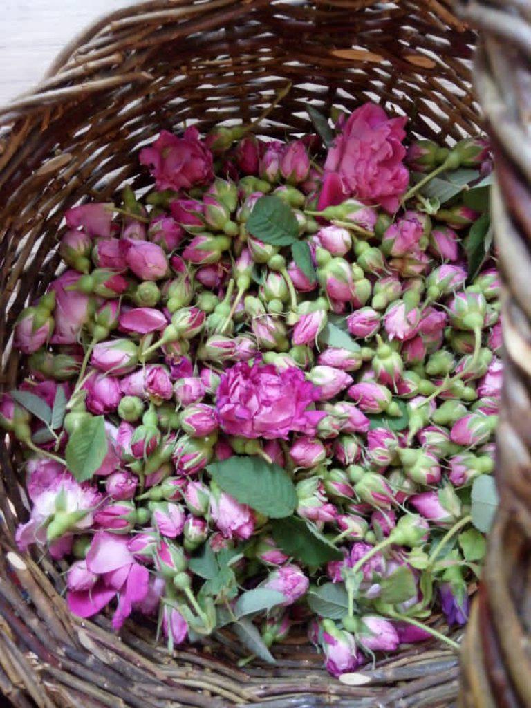 پودر شربت گل محمدی و زعفران (جلاب)